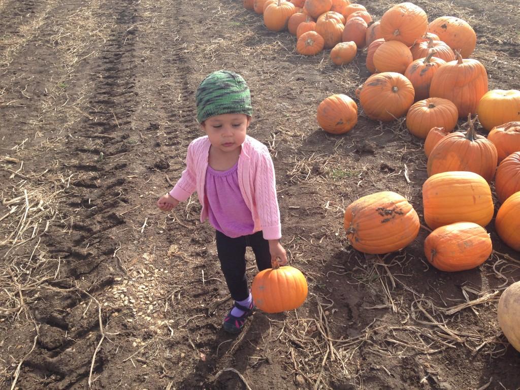Diana finds a pumpkin she likes...