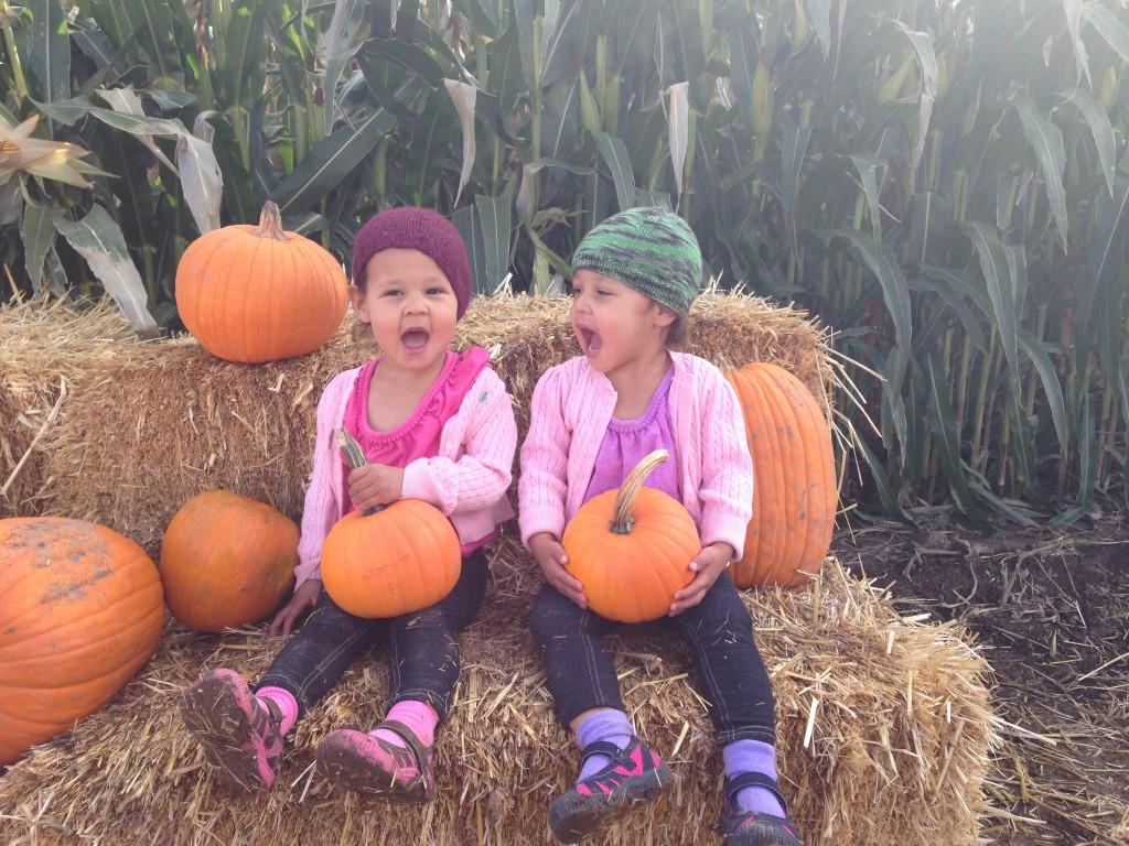Post-pumpkin selection...