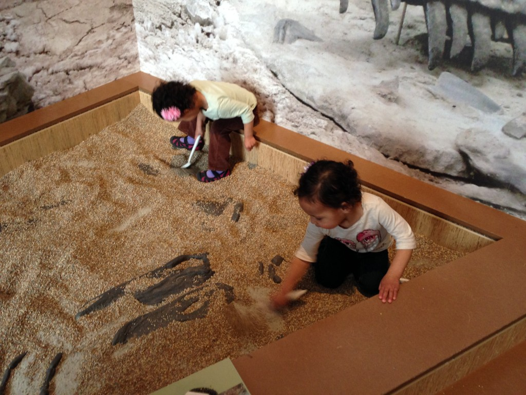 Digging for fossils at the Museum of Natural History