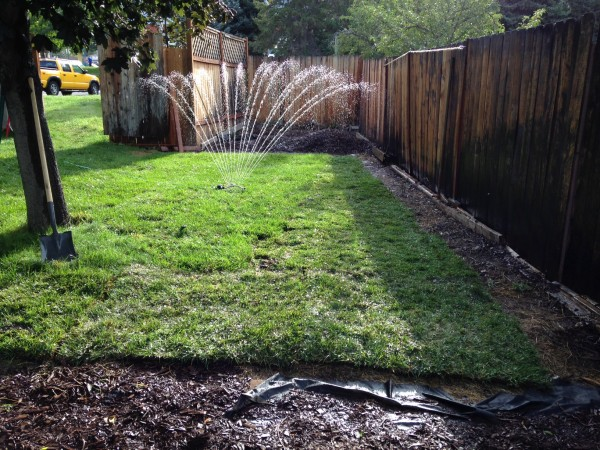 Instant Grass! (Complete with 2' border for planting)