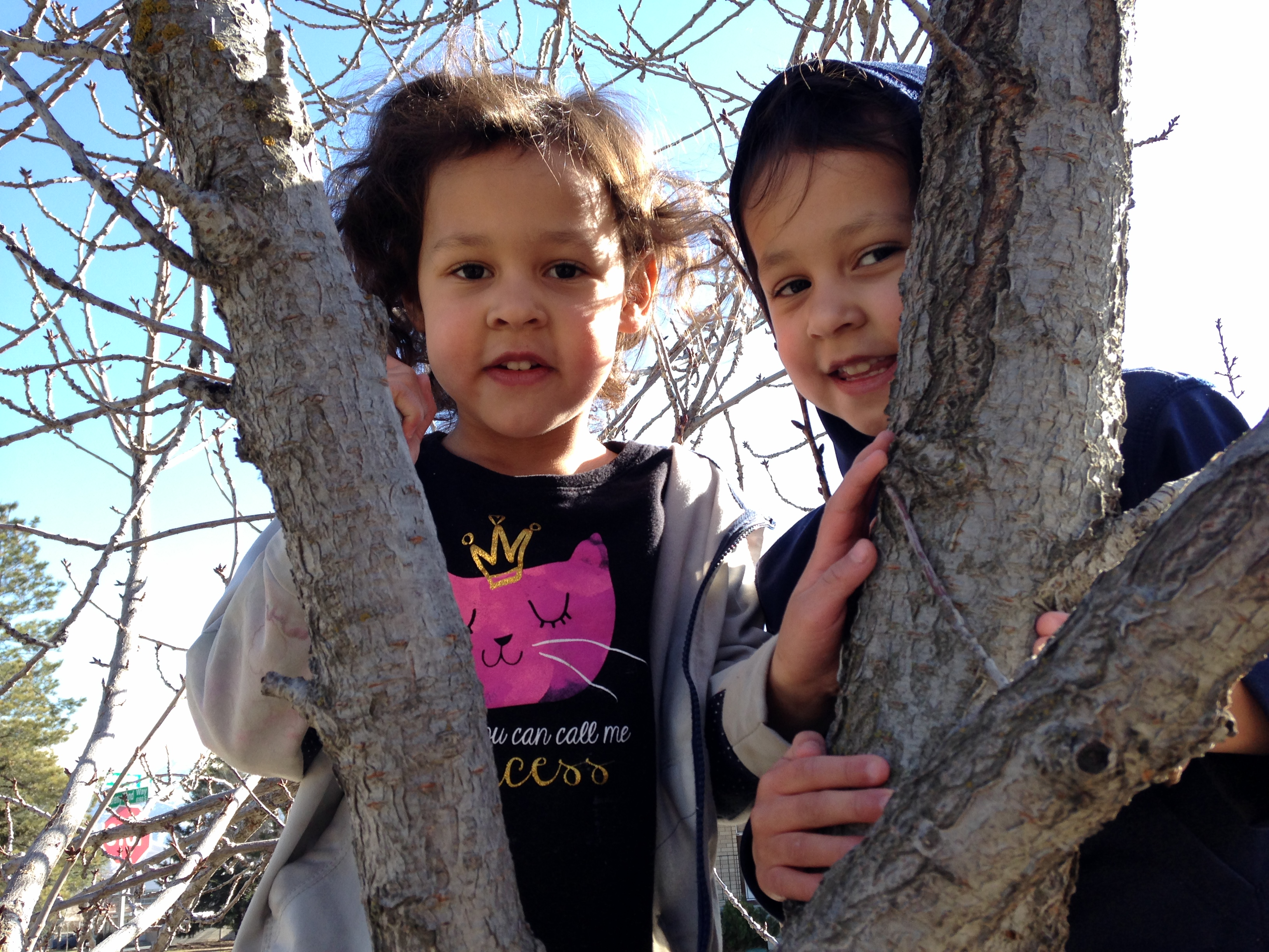 Tree-climbing001